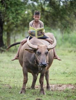 Мальчик читает книгу с ним буйвол, таиланд