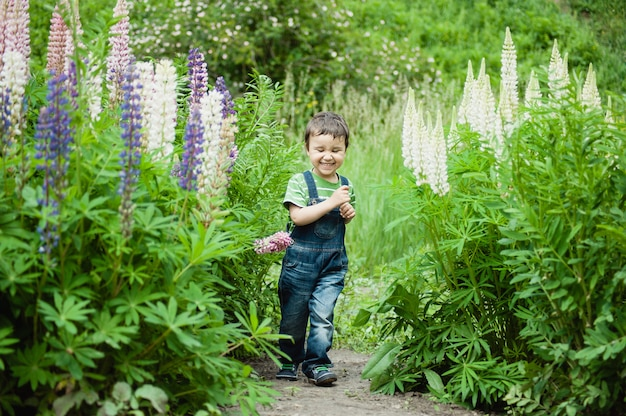Boy running between blooming flowers lupines