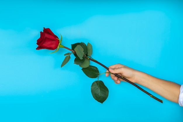 青の背景に赤いバラを与える少年の手。コピースペース