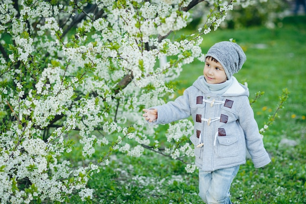 Boy smelling blooming cherry tree flowers at spring