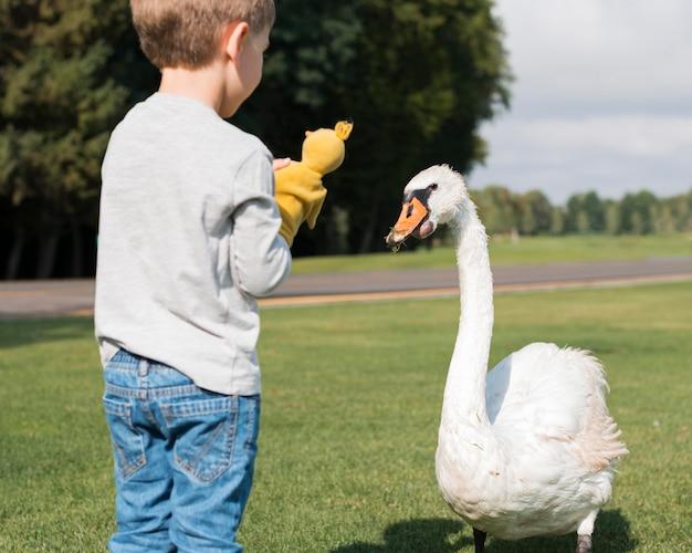 Мальчик стоит рядом с лебедем