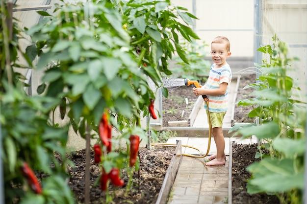 소년은 온실에서 식물, 물 묘목 돌봐