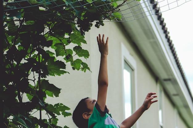 Мальчик пытается добраться до висящего винограда