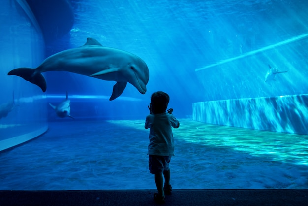 Мальчик наблюдает за дельфинами