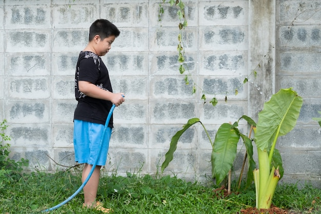 Boy watering the tree, asian kid
