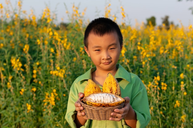 Boy with cacao fruit (products production from cacao) in beautiful sunhemp flower in garde