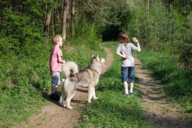 Boy with his dog malamute on a walk in the forest