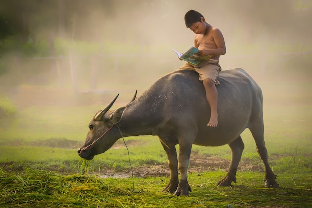 A boys riding buffaloes and reading a book for education.