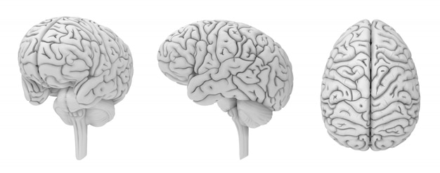 Brain 3d render collection black and white color isolated