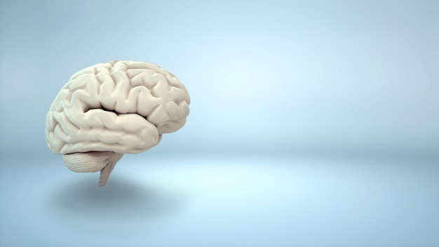 Brain on blue background