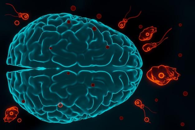 Инфекция амебы, поедающей мозг, наеглериоз. жгутиковые формы, трофозиты и цисты паразита naegleria fowleri, трехмерная иллюстрация
