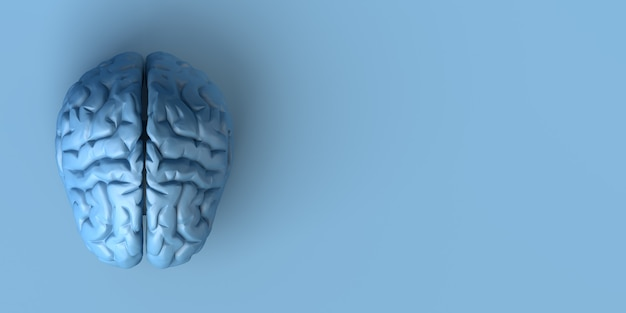 Мозг на синем фоне. креативность. 3d иллюстрации.