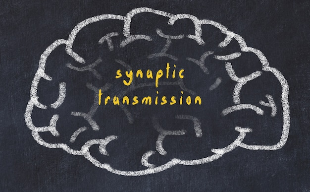 Brain with inscription synaptic transmission