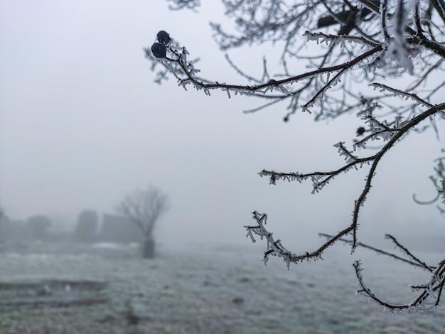 얼음과 서리와 안개가 있는 겨울의 가지와 시골 풍경, 얼음과 안개가 있는 겨울의 시골