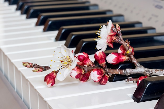 Branch of apricot with flowers on the piano keys