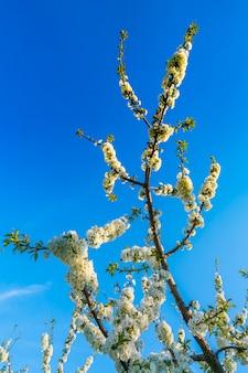 Filiale di bellissimo fiore bianco.