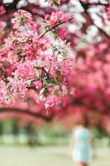 A branch of blooming cherry blossom covered with pink flowers