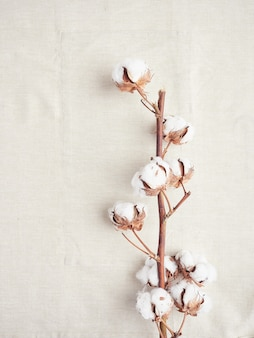 Branch of natural cotton flowers on organic cotton cloth