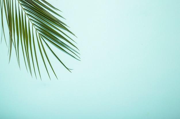 Ветвь пальмы на голубом фоне.