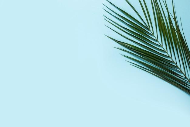 Филиал пальмы на голубом