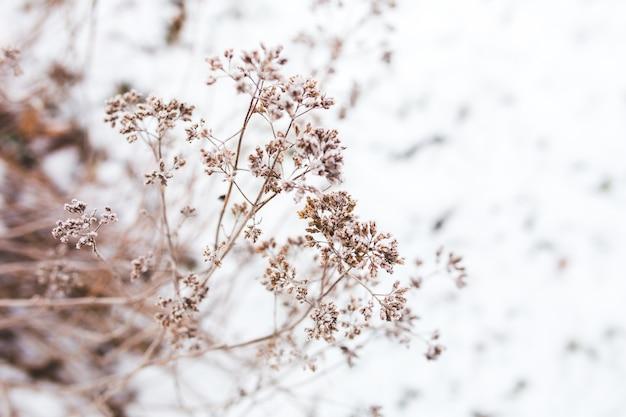 雪の背景に木の枝