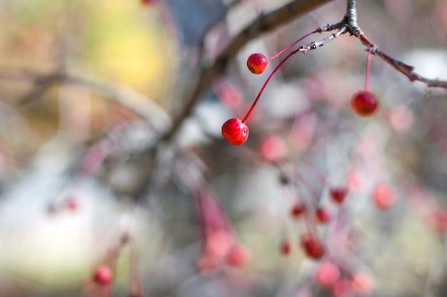 リンゴの木の枝