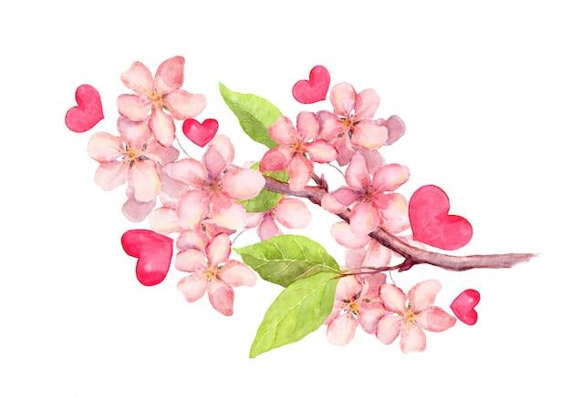 リンゴの花、桜の花の枝。ビンテージの水彩画ボタニカルイラスト