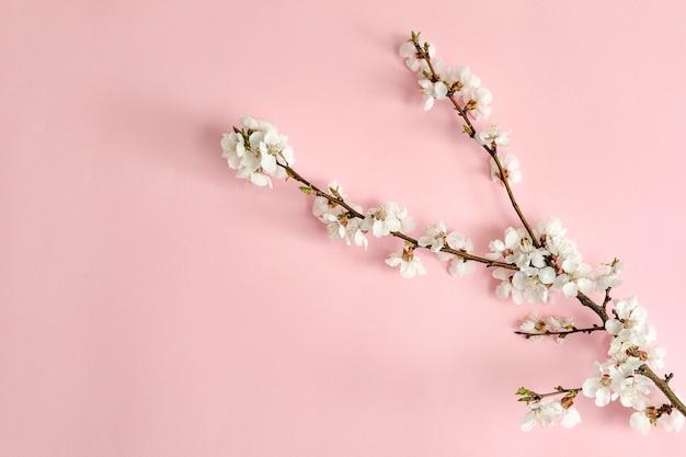 花とアプリコットの木の枝