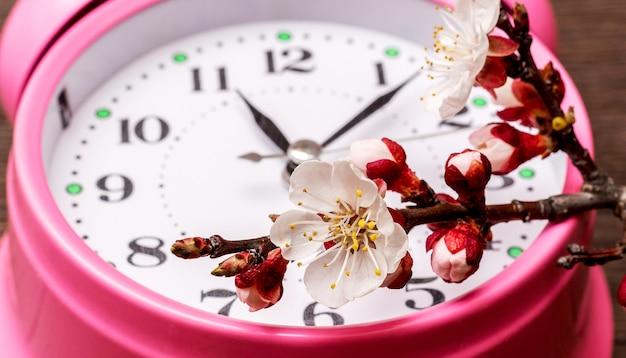 時計の近くに花が咲くアプリコットの枝