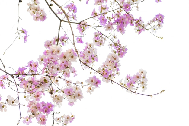 아름 다운 핑크색 꽃의 분 지