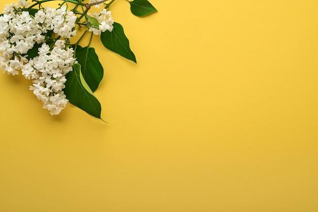 노란색 배경에 아름 다운 흰색 라일락의 분기입니다. 평면도. 결혼식, 행복한 여성의 날 발렌타인과 어머니의 날을 위한 라일락 축제 인사말 카드.