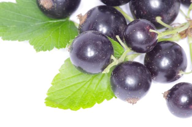 흰색 배경에 고립 된 검은 건포도 과일의 지점