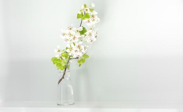 Ветка цветущей сакуры в стеклянной вазе, минимализм в интерьере, домашний дизайн