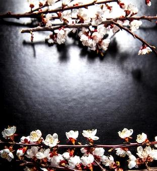 검은 색 표면에 꽃이 만발한 아몬드 꽃의 지점