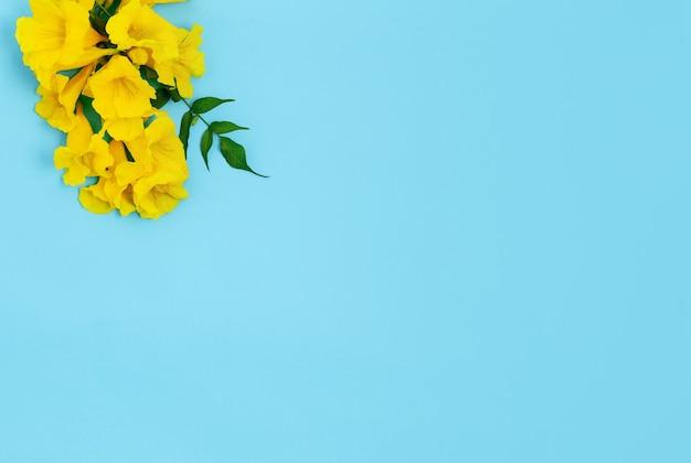 연한 파란색 배경에 꽃의 가지