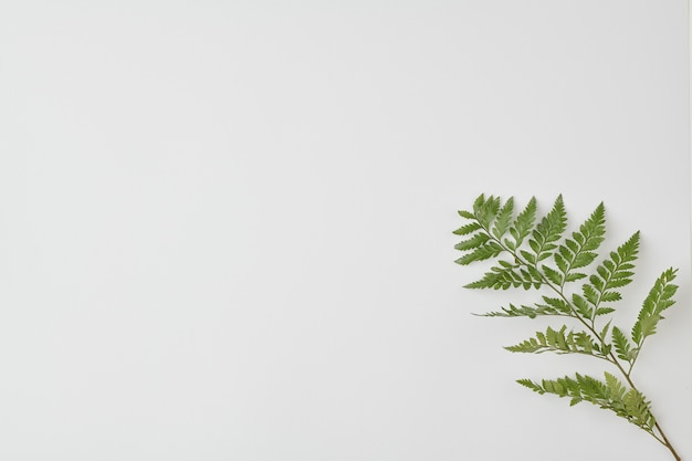 Изолированная ветка папоротника с зелеными листьями в правом нижнем углу, которую можно использовать как пространство
