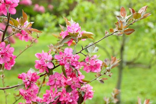 Филиал цветущего дерева