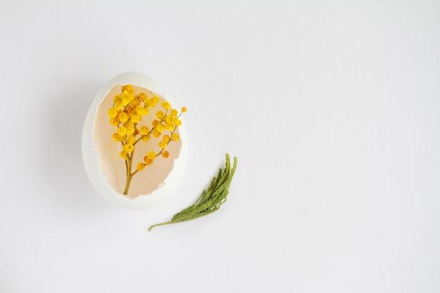 흰색 표면에 닭고기 달걀에서 흰 껍질에 미모사의 지점
