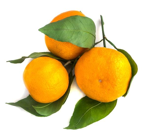 緑の葉を持つオレンジ色の熟したみかんの枝
