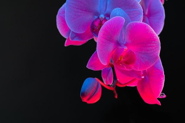 ネオンの光で暗い背景に蘭の花の枝をクローズアップ