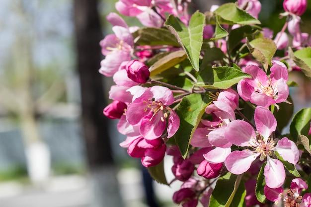春の桃の花の枝