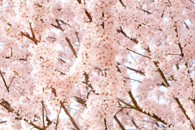 봄 따뜻한 날에 분홍색 꽃의 가지 꽃