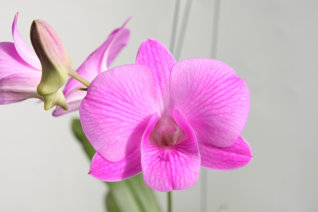 Филиал фиолетовой орхидеи на сером пространстве