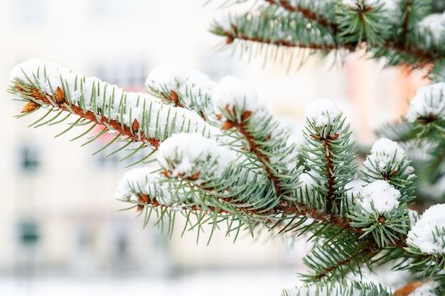 冬に雪が降るクリスマスモミの木の枝