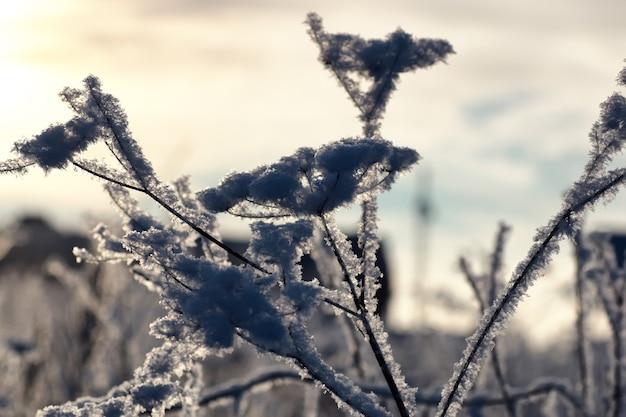 Ветвь растения покрыта снегом зимний макрос