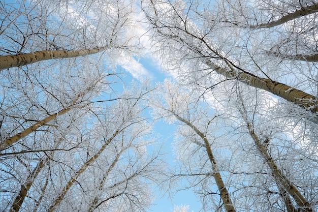Ветвь дерева в снегу против неба.