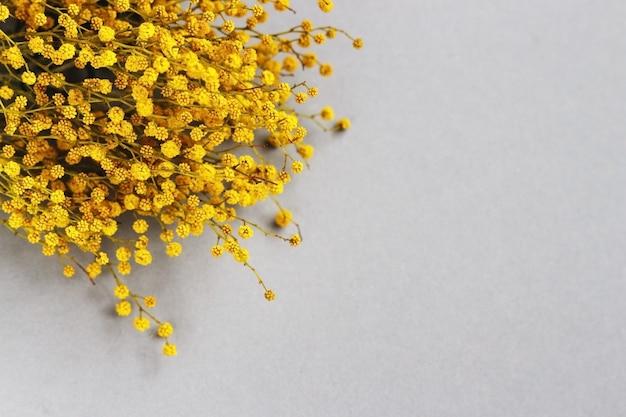 Ветвь мимозы желтых весенних цветов на сером фоне. модный цвет 2021 года.