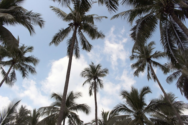 Branch palm leaf trees on the cloud blue sky background