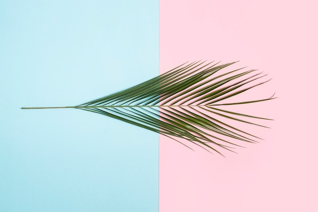 Branch of a palm tree on a light blue and pink background