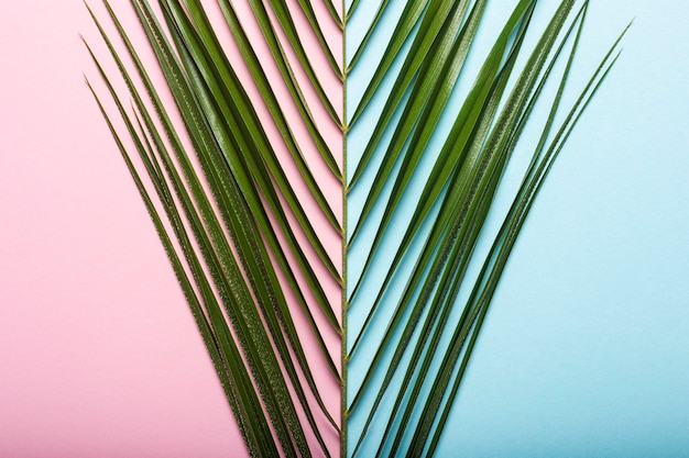 Branch of a palm tree on a light blue and pink background.